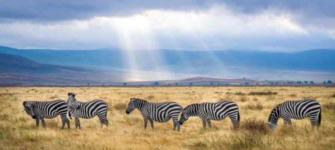 Africa Travel Safari Contracts Executive Middlesex, Hertfordshire, North London – £27k-£31k + benefits (PTR 2774)